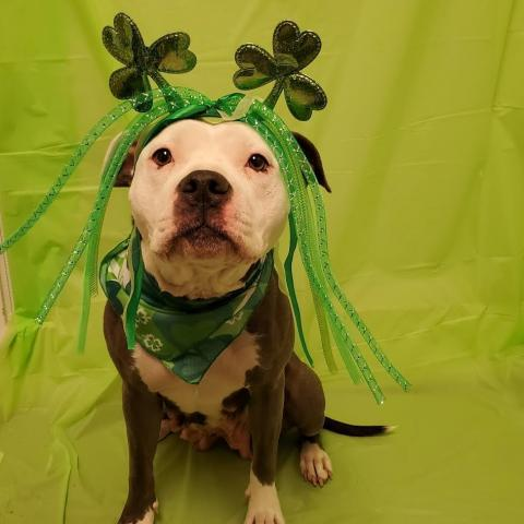 We Think You Should Adopt Dolly from Faithful Friends